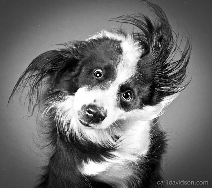 shake-dog-photography-carli-davidson-15