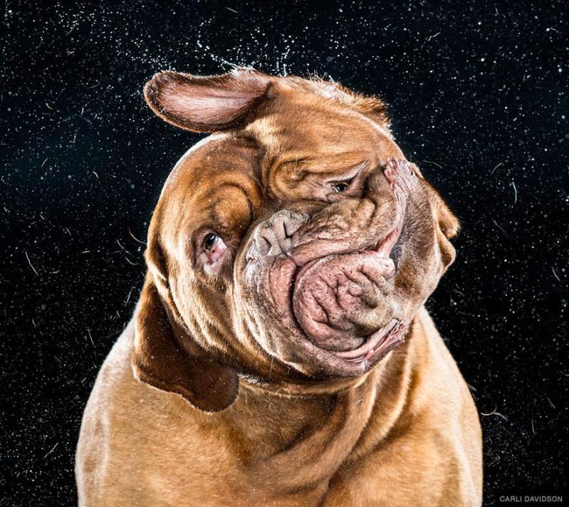 shake-dog-photography-carli-davidson-2