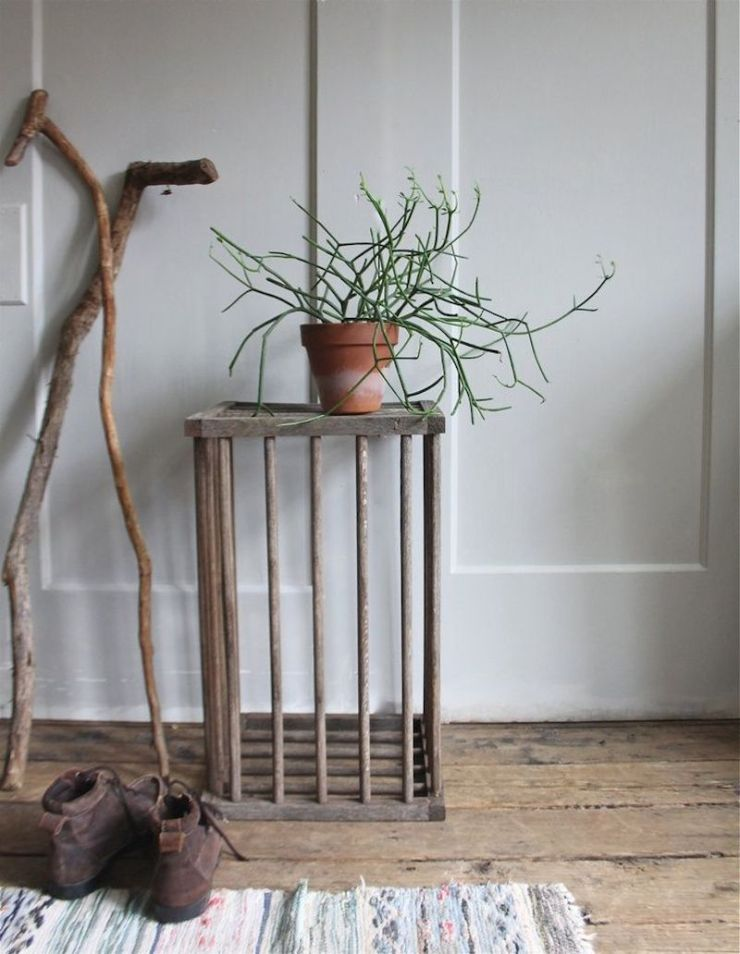 skeletor plant