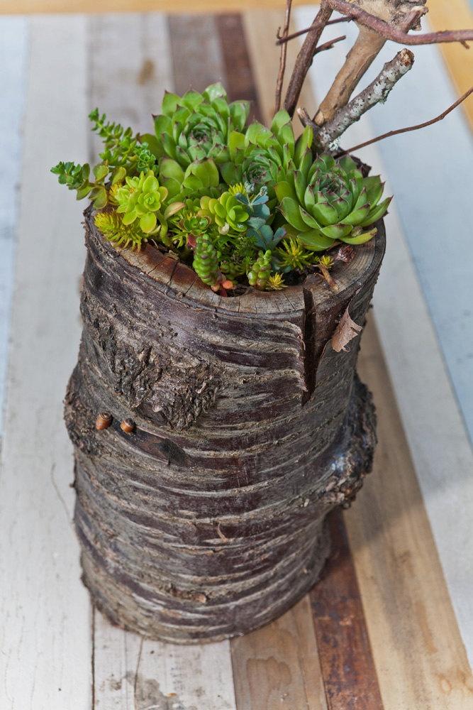 treeplanter