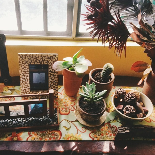 adosofsimple_succulents