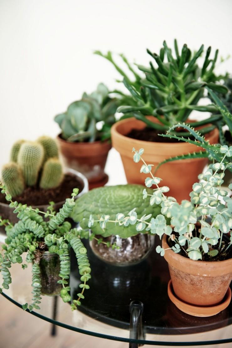 9-planten-verzameling-adoseofsimple